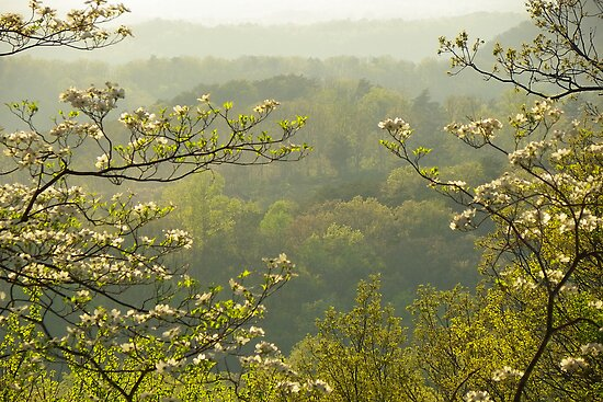 View Through the Dogwood by Kate Eller