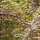 Dogwood Trees in the Woodland by Kate Eller