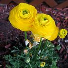 Sunshine Flowers by Darlene Bayne