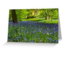 A Carpet of Bluebells Greeting Card
