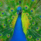 Psychadelic Peacock by G. Patrick Colvin