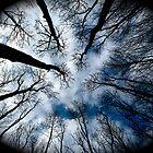 Tree cathedral by Amanda Gazidis