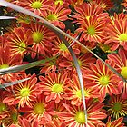 Red Flower Meets Green Spikes by mjparsons