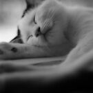 Sleeping Kitten by Dirk Michael Dudat