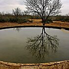 The Water Trough - Texas by Debbie Pinard