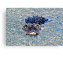 Wary gator! Canvas Print