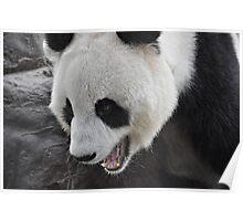 Panda Mania!!! Poster