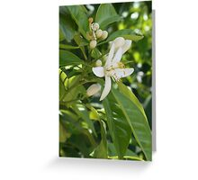 Seville Orange Blossom Greeting Card