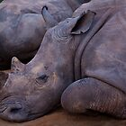 Lazy Rhino by Bobby McLeod