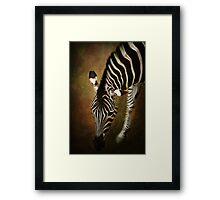 Z is for....Zebra Framed Print
