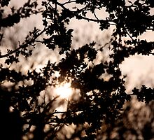 Sunset Blossom in Woods by Josh Hales
