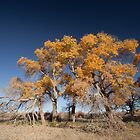 populus euphratica 07 by hkavmode