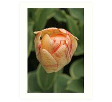 Tulip - Keukenhof gardens, Netherlands Art Print