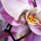 Orchid in bloom by Llawphotography