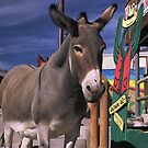 It's A Burro's Life by peterchristian