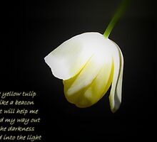 The yellow tulip is lik a beacon... by Poete100