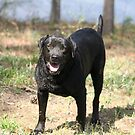 Black Lab by DebbieCHayes