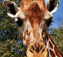 Giraffe by ☼Laughing Bones☾