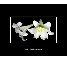 Easter Lilies Photographic Print