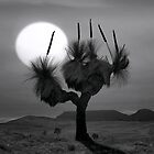 Grass tree in mono by Hans Kawitzki
