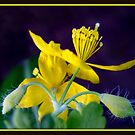 Even the flowers of weeds can be beautiful ! by Gail Jones