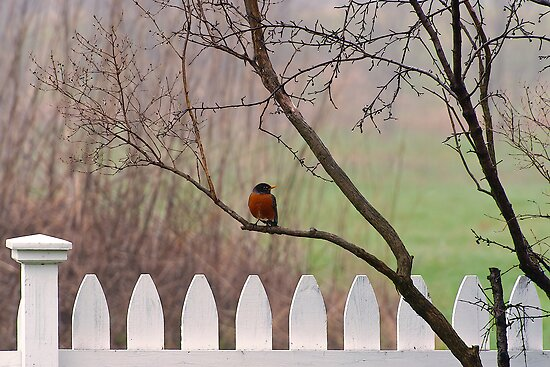 Good Morning, Robin by Joseph T. Meirose IV