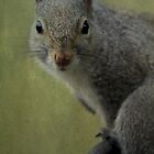 Squirrel Portrait by Renee Blake