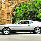 another random Mustang pic  by Stuart Baxter