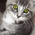Cats Eyes by Llawphotography