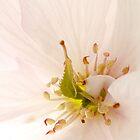 Spring Awakening #2 by Ronny Falkenstein