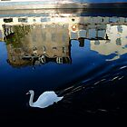 Swanning down the Water of Leith by Chris Cherry