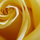 Yellow Rose by Cassie Jahn