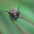 Honeybrown by salsbells69
