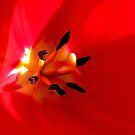 The Heart Of The Tulip by Darlene Bayne