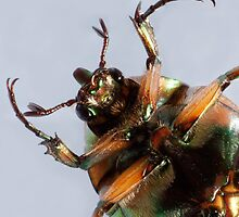 Green June Beetle Face Macro by Zunazet