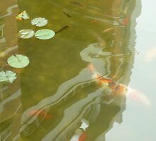 Huge Orange Fish Swimming in lily pond by Joseph Green