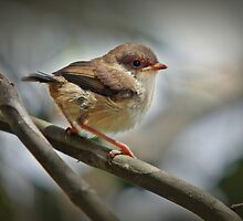 Baby Wren by Barb Leopold