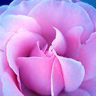 Rose Petal Folds by Janice Dunbar