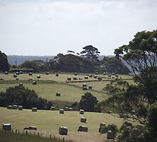 Hay Bales Galore by CallumPoke