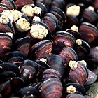 Moored Mussles by Aileen David