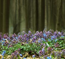 Spring wood by VallaV