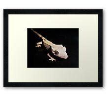 Jacques Framed Print
