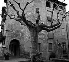 Old tree in Besalú by Esther  Moliné