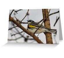 First Warbler of the Season (Yellow-rumped Warbler) Greeting Card