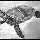 Sea Turtles are endangered species by 1illustlady
