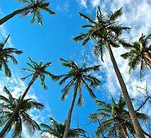 Reach for the Blue Sky - Palm Trees by Deborah V Townsend