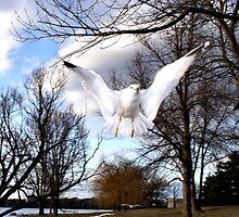 Soar by Heather King
