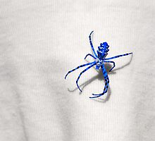 Blue Spider sits on the fabric by qiiip