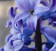 Hyacinth by Brittany Kinney