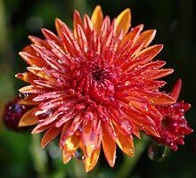 Sprinkled  Droplets by Sheri Bawtinheimer